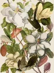 Magnolia taupe