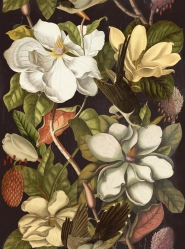 Magnolia zwart