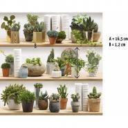 Cactusverzameling behang