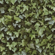 Ivy wall wallpaper