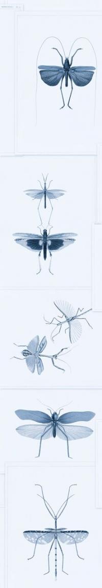 Entomologie blauw