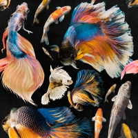 Luxebehang goudvis antraciet