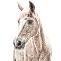 Magnetisch behang met print Paard