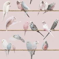 Exotic lovebirds pink blue wallpaper