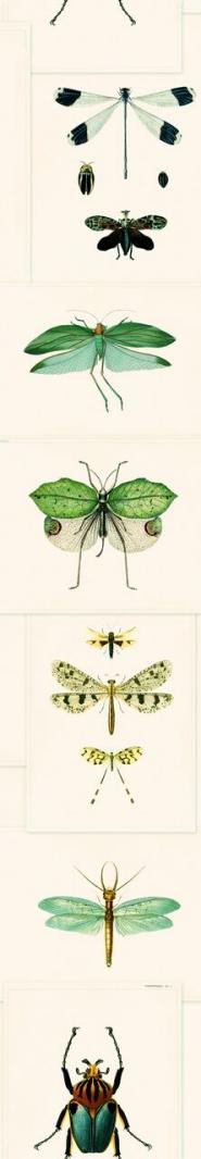 Entomologie groen