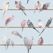 Exotic lovebirds blue wallpaper